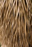 Dried palm tree leaves tropical house roof Stock Images