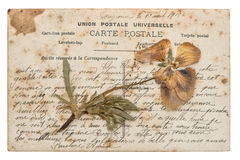 Dried pansy flower and old post card  on white Royalty Free Stock Images
