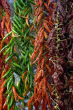 Dried paprika. Lines of paprika being dried on the market Stock Photo