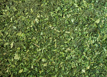 Dried parsley. Green tops of dried parsley - background Stock Photography