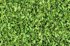 Dried Parsley Flakes - Background. Background - Ingredient for food Dried Parsley flakes  ideal for prints over packing or advertisement materials Royalty Free Stock Photography