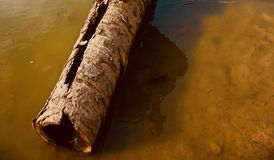 A dried parts of a dead tree in the water royalty free stock image