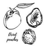 Dried peaches hand drawn illustration. Ink sketch of nuts. Hand drawn illustration. Isolated on white background. stock illustration