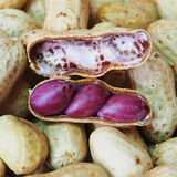 Dried peanut in shells Royalty Free Stock Photo