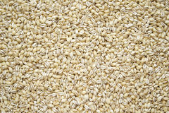 Dried Pearl Barley Royalty Free Stock Image