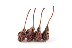 Dried pears Royalty Free Stock Photo