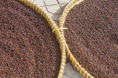 Dried peppercorn Stock Photo