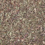 Dried peppermint Royalty Free Stock Image