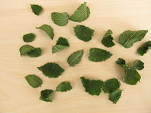 Dried peppermint leaves Stock Photos