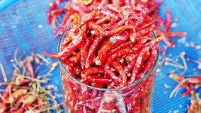 Dried peppers Paprika or red chilli royalty free stock photo