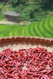 Dried peppers with rice fields, China Royalty Free Stock Image