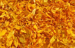 Dried petals of sunflowers Royalty Free Stock Photo