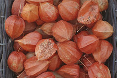 Dried physalis Royalty Free Stock Image