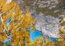 Dried pine branch above blue sea royalty free stock photos