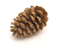 Dried Pine Cone. One pine cone on a white background Stock Photo