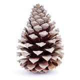 Dried pine cone Stock Image