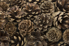 Dried pine cones Royalty Free Stock Photography