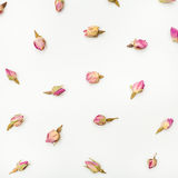 Dried pink rose flower buds close up on white Stock Photo