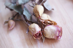 Dried Pink Roses Stock Photography