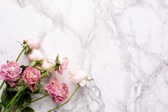 Dried pink roses on marble background macro royalty free stock photos