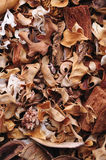 Dried plants background. Leaves, petals, cork etc Stock Photography