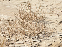Dried plants in the desert stock photo