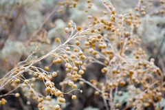 Dried plants and nature Royalty Free Stock Photos