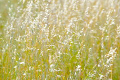 Free Dried Plants On A Field Royalty Free Stock Images - 5275879