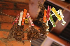 Dried plants pinned. A bunch of dried plants and flowers pinned with colorful cloth pins Royalty Free Stock Image