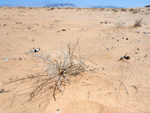Dried plants in Wadi Rum desert Royalty Free Stock Photography