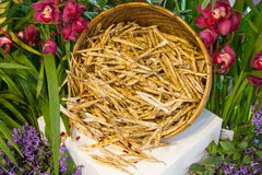 Dried pods of beans Stock Photography