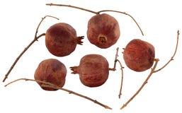 Dried pomegranates Stock Image