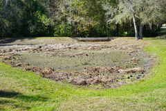 Dried pond in Florida Royalty Free Stock Image