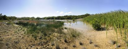 Dried pond panorma Royalty Free Stock Photo