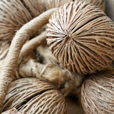 The dried pong pong seed (othalanga, suicide tree) Stock Photos