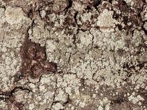Dried poplar Bark, Padana Plain, Italy. royalty free stock photo