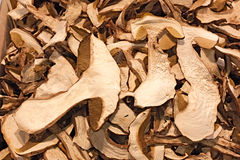 Dried Porcini Mushrooms Royalty Free Stock Images