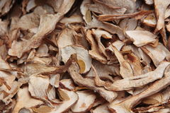 Dried Porcini mushrooms. A collection of dried Porcini mushrooms Royalty Free Stock Images