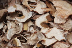 Dried Porcini mushrooms. A collection of dried Porcini mushrooms Royalty Free Stock Photos