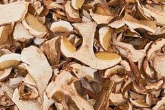 Dried porcini mushrooms. Slices of dried porcini mushrooms, edible boletus edulis, on display in the italian market Stock Image