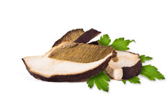 Dried porcini mushrooms Royalty Free Stock Photography