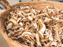 Dried porcini mushrooms in wicker bowl Royalty Free Stock Photo