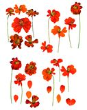 Dried pressed kosmeya, Cosmos delicate flowers and petals isolated royalty free stock photography