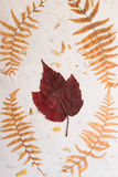 Dried pressed leaves #2. Natural and textural background of dried pressed leaves, maple and fern Stock Photo