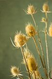 Dried prickly plant. S on a dark green background Stock Photo