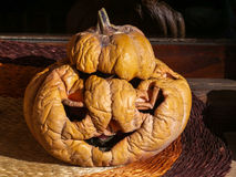 Dried pumpkin for Halloween Royalty Free Stock Photo