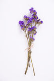Dried purple flower on white background Stock Photography