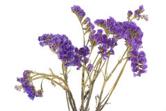 Dried Purple Flowers On The White. Stock Photo