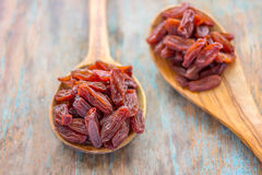 Dried Raisins. On the wooden spoons. Raisins / dried grapes stock image Stock Photography