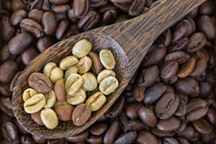 Dried raw unroasted green coffee berry seeds on top of roasted c Royalty Free Stock Photo